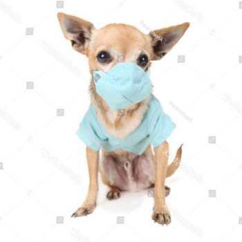 Chihuahua Scrubs