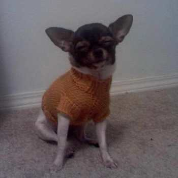 Chihuahua Sweater Knitting Pattern