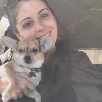 Chihuahua Trainers