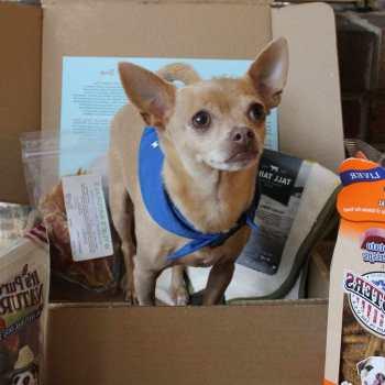 Chihuahua Treats