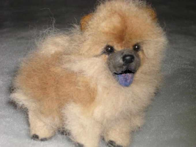 Chow Chow Pomeranian Mix For Sale Petsidi