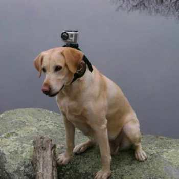 Denver Labrador Rescue
