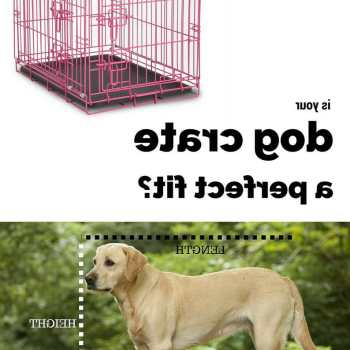Dog Crate Size For Labrador