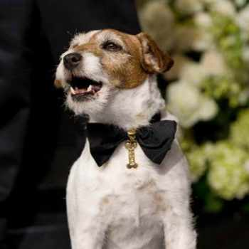 Famous Jack Russell Terrier