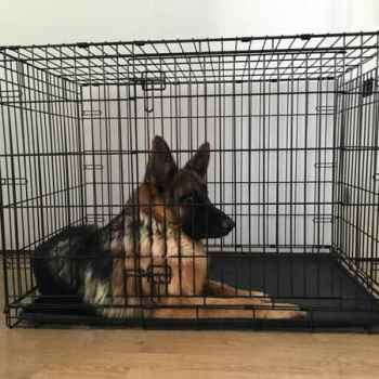 Crate Size For German Shepherd