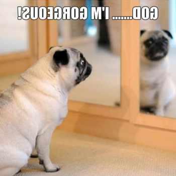 Cute Pug Stuff