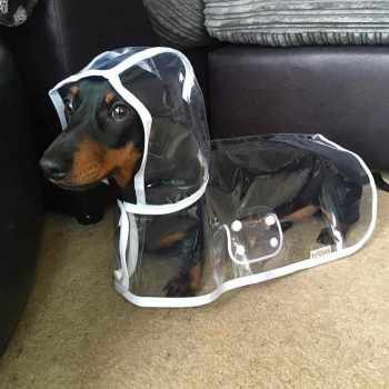 Dachshund Raincoat With Hood
