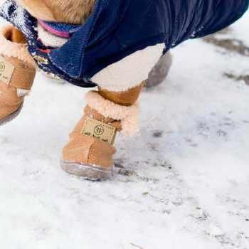 Dachshund Winter Boots