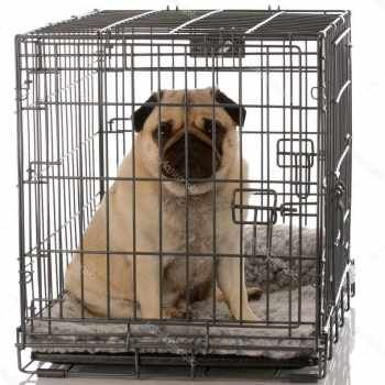 Dog Crate For Pug