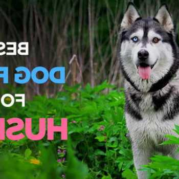 Dog Food For Husky Puppies