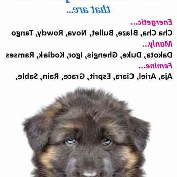 Dog Names For Male German Shepherd Puppies