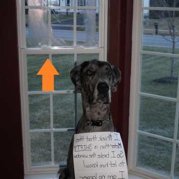 Doggie Door For Great Dane