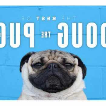 Dug The Pug