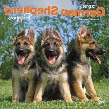 Ebay German Shepherd Puppies