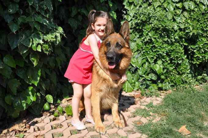 German Shepherd And Kids