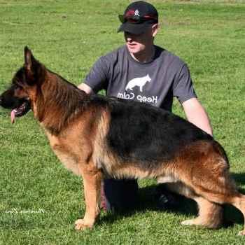 German Shepherd Breeders In Ca