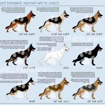 German Shepherd Breeds List