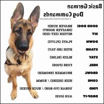 German Shepherd Commands In German
