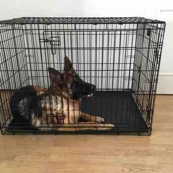 German Shepherd Dog Crate Size
