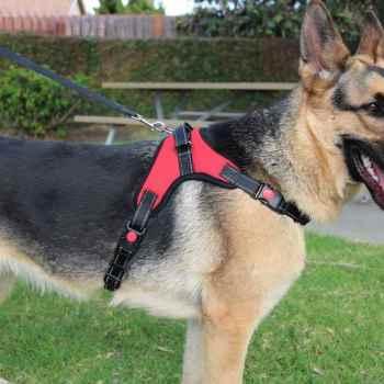 German Shepherd Harness Size
