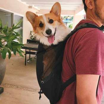 Corgi Backpack Carrier