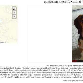 Craigslist Beagle