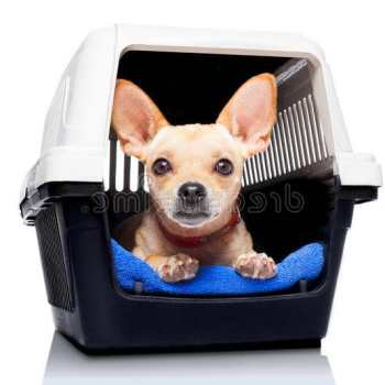 Dog Crate For Chihuahua