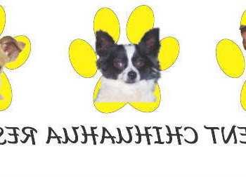 Enchantment Chihuahua Rescue Nm