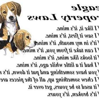 Everything Beagle