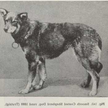 German Shepherd History