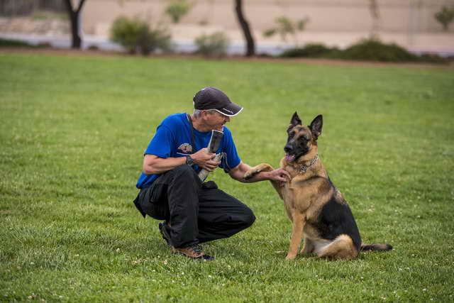 German Shepherd Las Vegas