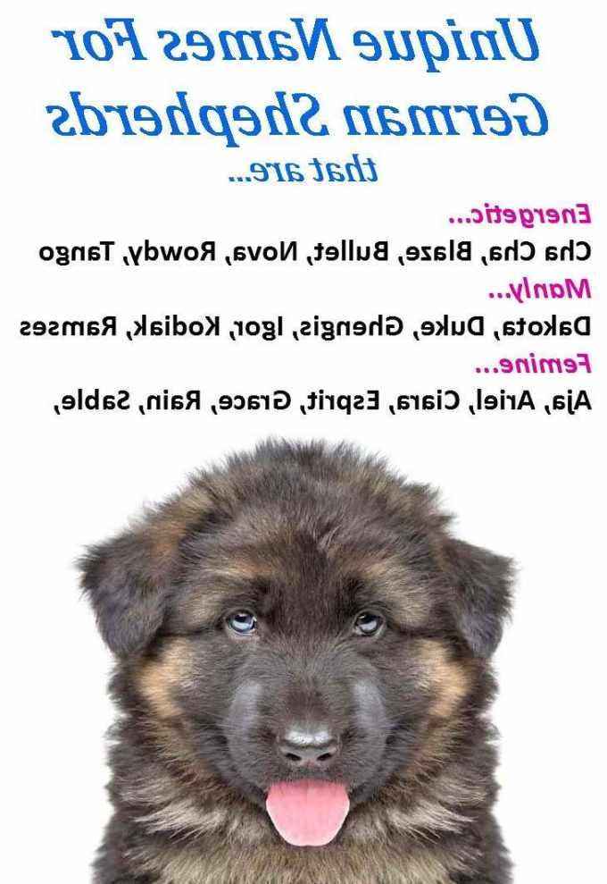 German Shepherd Male Dog Names