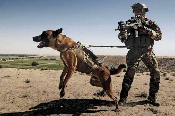 German Shepherd Military Dogs