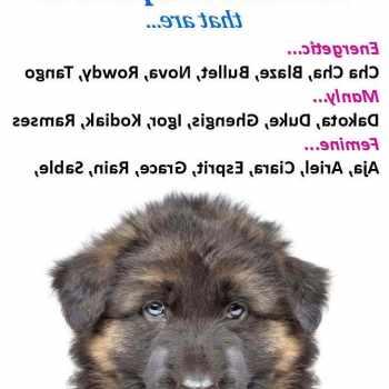 German Shepherd Puppy Names Girl