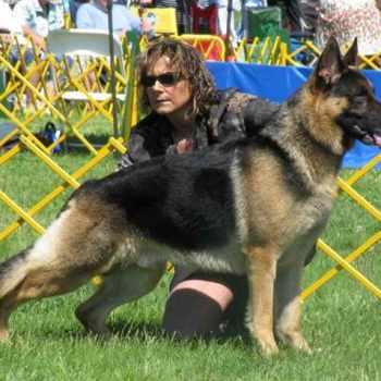 German Shepherd Review