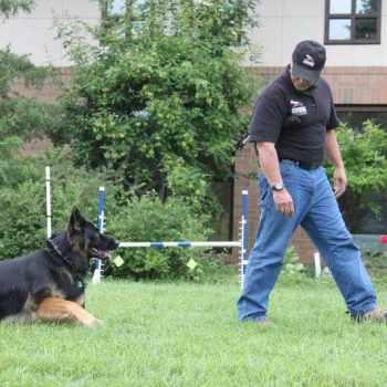 German Shepherd Training Nashville Tn