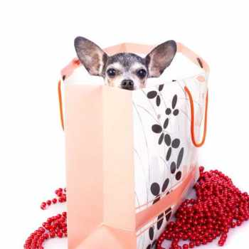 Gifts For Chihuahua Lovers