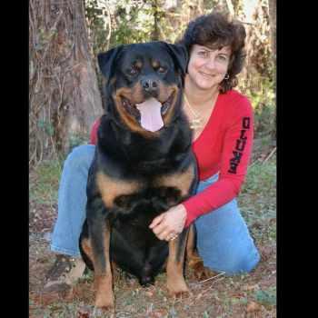 Gladiator Rottweiler For Sale