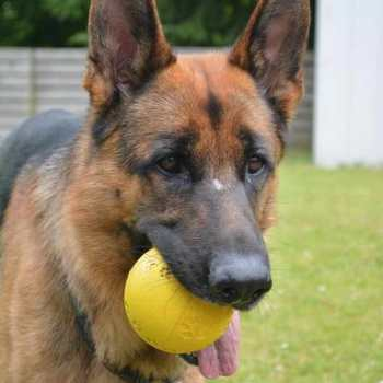 Good Toys For German Shepherd