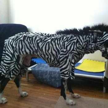 Great Dane Dog Costume