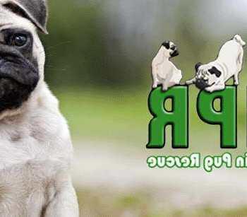 Green Mtn Pug Rescue