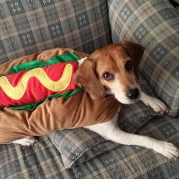 Halloween Beagle