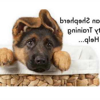 Housebreaking German Shepherd Puppy