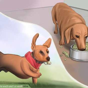 How To Take Care Of A Dachshund