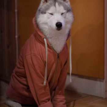 Husky Dog Sweaters