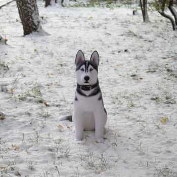 Husky Dog Toy