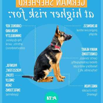 How Much Does It Cost To Train A German Shepherd