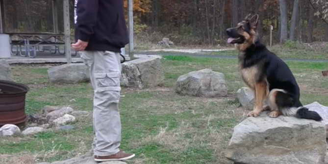 How To Train A 2 Year Old German Shepherd