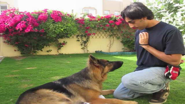 How To Train A German Shepherd To Stay