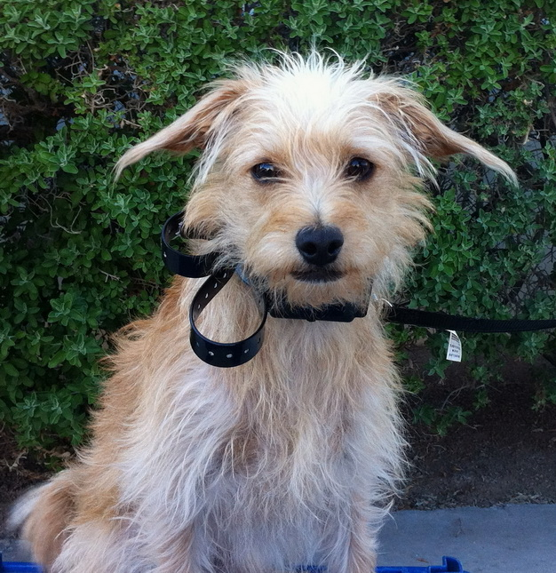 How To Train A Terrier Mix Dog